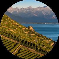 Weinwelt Schweiz